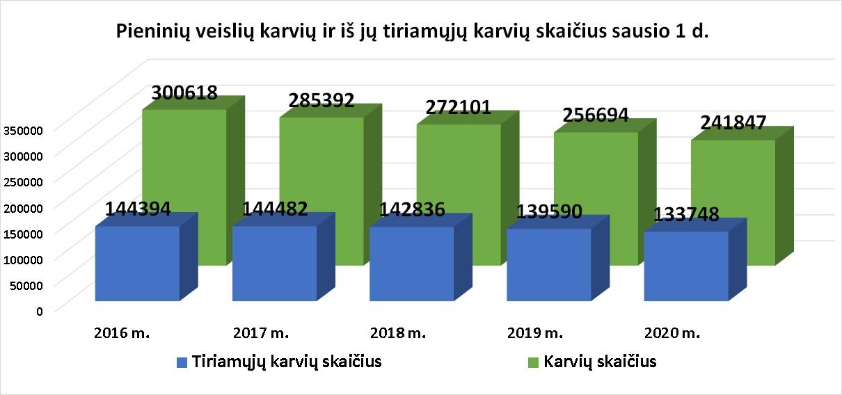 4 pav. Pieninių veislių karvių ir iš jų tiriamųjų karvių skaičius sausio 1 d.