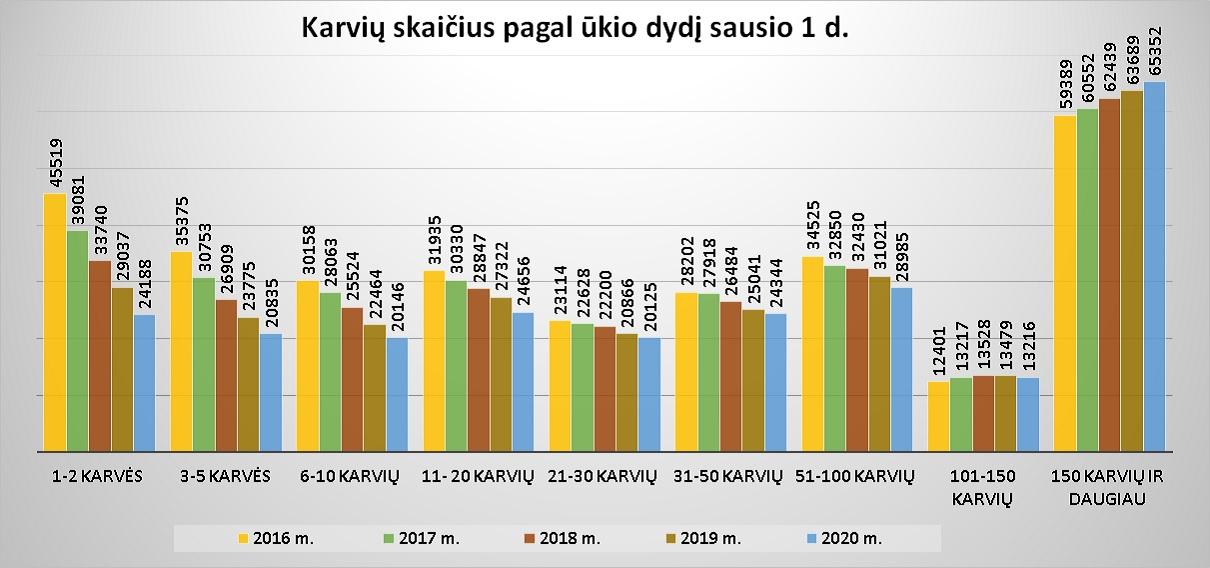 6 pav. Karvių skaičius pagal ūkio dydį sausio 1 d.