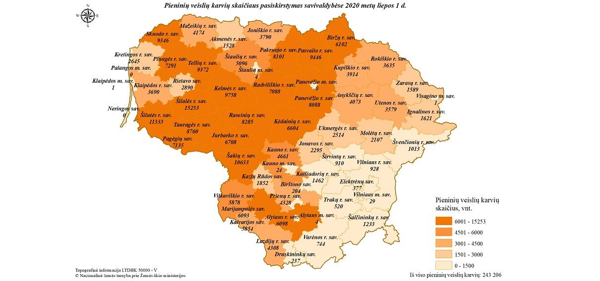 2 pav. Pieninių veislių karvių skaičiaus pasiskirstymas savivaldybėse