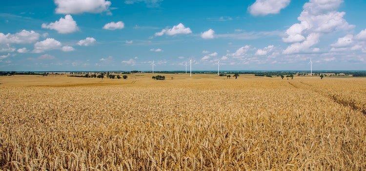 2018-06-12 Baigėsi pagrindinis paramos už žemės ūkio naudmenas ir kitus plotus bei gyvulius paraiškų teikimas, kuris vyko nuo balandžio 16 d. iki birželio 8 d.