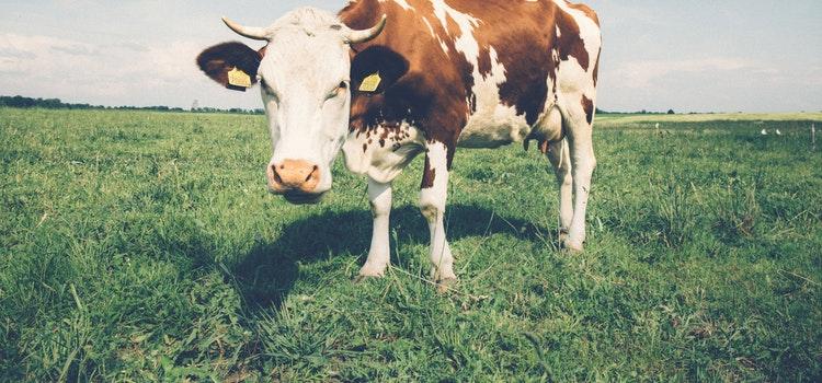 Ūkinių gyvūnų bandų analizė 2019 m. spalio mėn.