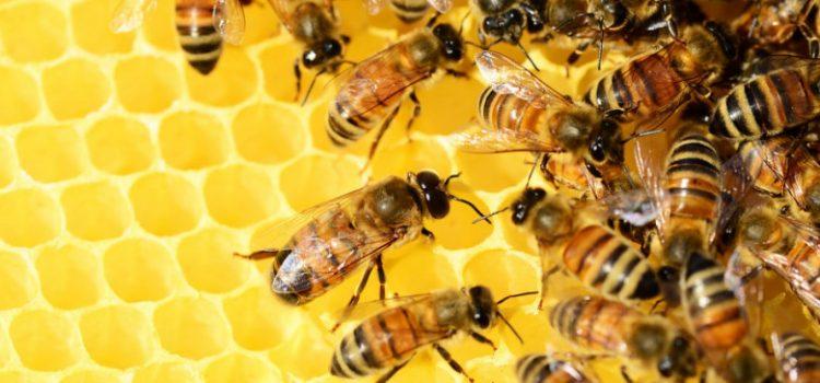 Svarbi informacija bičių laikytojams