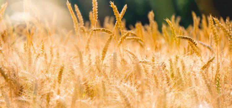 Prasidėjo žemės ūkio naudmenų ir kitų plotų deklaravimas