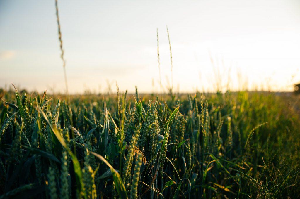 2020 m. žemės ūkio naudmenų ir kitų plotų deklaravimas