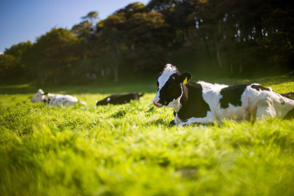 2020 m. pereinamojo laikotarpio nacionalinė parama už pieną