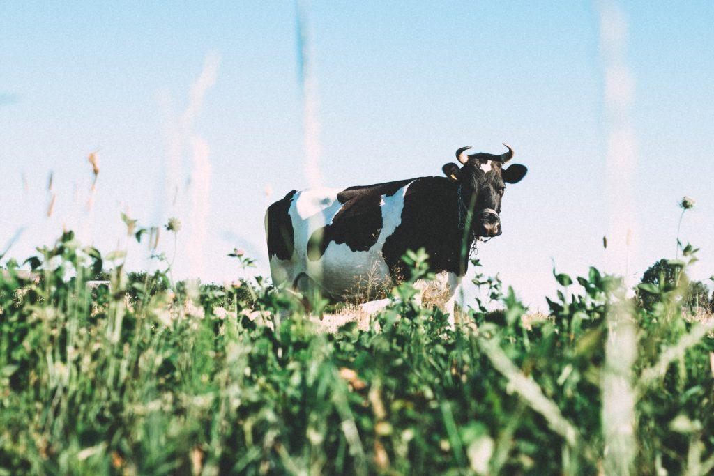 Pieno supirkimas iš pieno gamintojų ir mokama kaina 2020 m. sausio–rugpjūčio mėn.