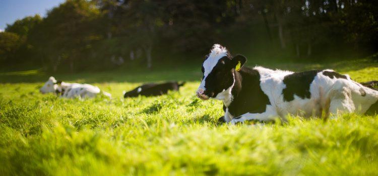 Pieno supirkimas iš pieno gamintojų, mokama kaina per 2020 metų devynis mėnesius
