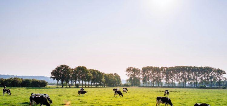 Pieno supirkimas iš pieno gamintojų, mokama kaina per 2020 metų dešimt mėnesių