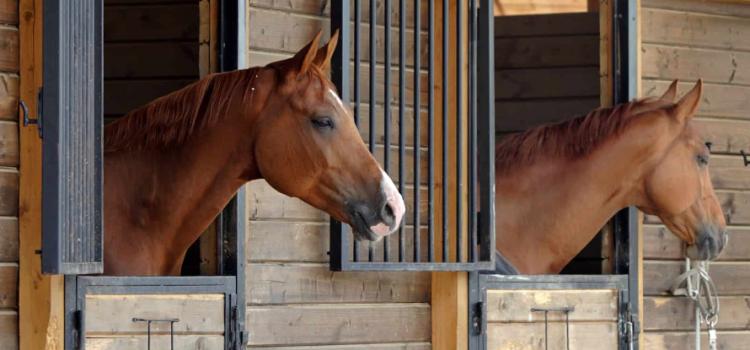 Keičiama arklinių šeimos gyvūnų tapatybės nustatymo dokumento išdavimo tvarka