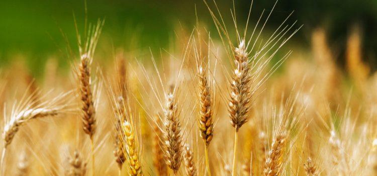 Reorganizuojamas LR patvirtintų pašarų ūkio subjektų registras