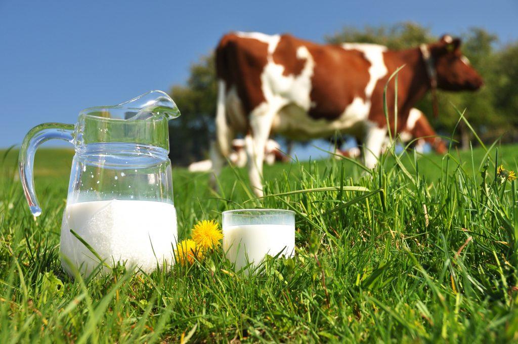 Pieno supirkimas iš pieno gamintojų, mokama kaina per 2021 metų tris mėnesius