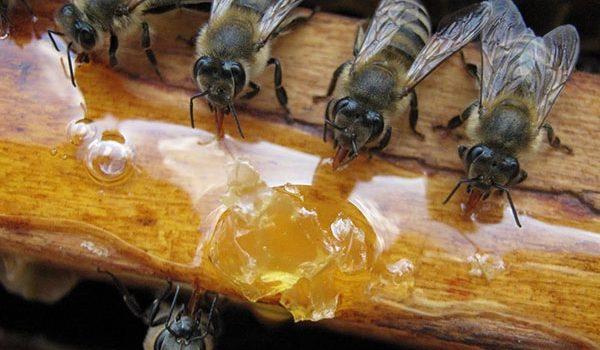 Nuo š. m. rugpjūčio 2 d. priimamos paraiškos paramai už papildomą bičių maitinimą