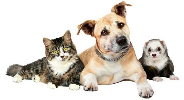 Gyvūnų augintinių kergimo ar dirbtinio apvaisinimo duomenų įvedimas